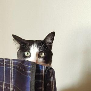 Orecchie gatto, curiosità sull'udito